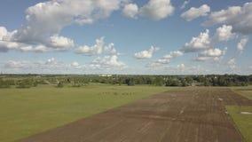 吃草的马是绿色牧场地 马在领域吃草 在棕色马的鸟瞰图在一个绿色草甸 股票录像