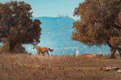 吃草的驴 库存图片