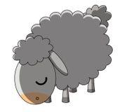 吃草绵羊白色的背景 免版税库存照片