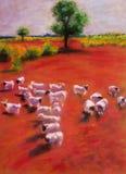 吃草羊羔草甸是 库存照片