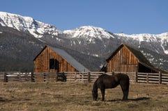 吃草自然木谷仓山大农场冬天的家畜马 库存照片