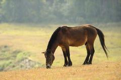 吃草草的马在日出 免版税图库摄影