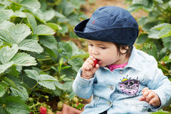 吃草莓的女孩 免版税库存照片