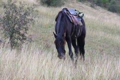 吃草马的乡下 免版税库存照片