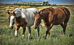 吃草马的域 免版税库存照片