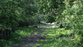 吃草鹿的森林