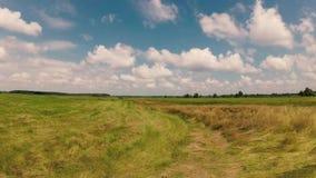 吃草,绿色草甸在与云彩的蓝天下 股票录像