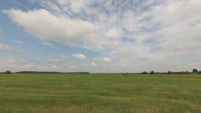 吃草,绿色草甸在与云彩的蓝天下 股票视频