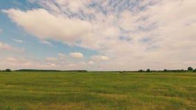 吃草,绿色草甸在与云彩的蓝天下 影视素材