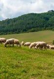 吃草绵羊村庄Sulov - Hradna 免版税图库摄影