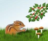 吃莓果的花栗鼠 库存照片