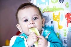 吃菜的婴孩 在一张高脚椅子 长牙齿,黄瓜,食物的概念,哺养 新出生的家 健康 第一 免版税库存图片