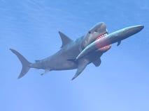 吃蓝鲸的Megalodon鲨鱼- 3D回报 免版税库存照片