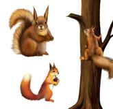吃藤茎,小灰鼠,欧亚红松鼠-中型松鼠的红松鼠寻常。隔绝在白色背景。 免版税库存图片
