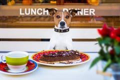 吃蛋糕和茶的狗在resataurant 免版税库存图片