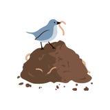 吃蠕虫的鸟 免版税库存照片