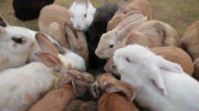 吃顶面射击的兔子小组 图库摄影