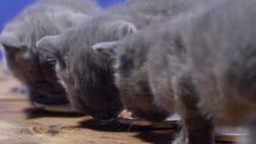 吃食物小猫 股票录像