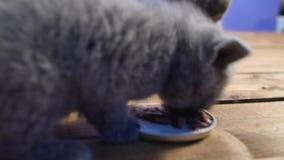 吃食物小猫 股票视频