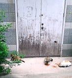 吃食物的三只无家可归的猫 免版税库存照片
