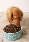 吃食物的狗 免版税库存照片