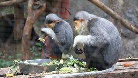 吃食物的逗人喜爱的猴子 免版税库存图片