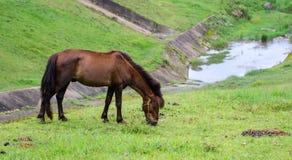 吃马 免版税库存照片