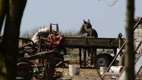 吃从拖车的马草在废品旧货栈 股票视频