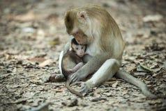 吃从母亲的小猴子牛奶 免版税库存图片