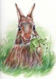 吃snowdrops的东部兔宝宝 免版税库存照片