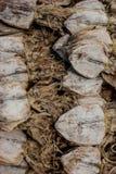 各式各样的乌贼卖了在街道食物摊位在Chatuchak周末市场,曼谷,泰国上 库存图片