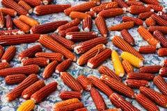 各式各样的玉米地毯  免版税库存照片