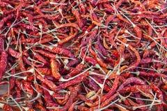 各式各样的红色泰国辣椒 免版税库存照片