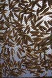 各式各样的鱼 免版税库存图片