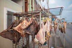 各式各样的黄貂鱼在海滨城镇 免版税库存照片
