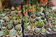 各种各样五颜六色的多汁植物 免版税库存图片
