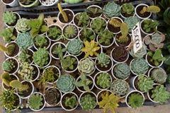 各种各样五颜六色的多汁植物 图库摄影