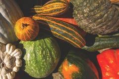 各种各样五颜六色的装饰金瓜/五颜六色的金瓜顶视图  免版税库存图片