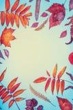 各种各样的五颜六色的小的南瓜、苹果和秋天创造性的舱内甲板位置在白色桌背景,顶视图离开 秋天composin 库存图片