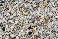 各种各样的五颜六色的海壳、珊瑚和沙子纹理 库存照片