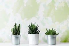 各种各样的仙人掌和多汁植物的汇集用不同的罐 白色架子的盆的仙人掌房子植物对设计墙壁 免版税库存图片