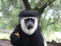 各种各样的动物在徒步旅行队的非洲在肯尼亚 图库摄影