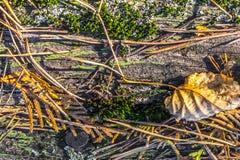 各种各样的叶子在t下落了的老树纹理 库存图片