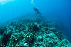 各种各样的坚硬珊瑚礁在哥伦打洛市,印度尼西亚 库存照片