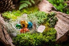 各种各样的复活节彩蛋在日出的森林里 免版税图库摄影