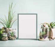 各种各样的室内植物和仙人掌在罐在空白的白色框架嘲笑附近在现代桌面背景 多汁植物概念 免版税库存图片