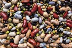 各种各样的干豆类 免版税图库摄影
