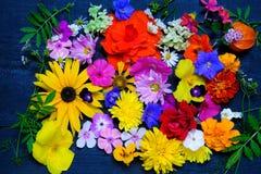 各种各样的庭院纹理开花,顶视图 免版税库存图片