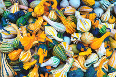 各种各样的形状和颜色南瓜  免版税库存照片