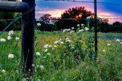 各种各样的得克萨斯野花在日落的得克萨斯牧场地 免版税库存图片
